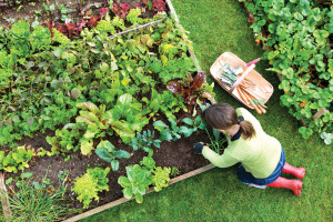 Must-Have Plants for Your Garden