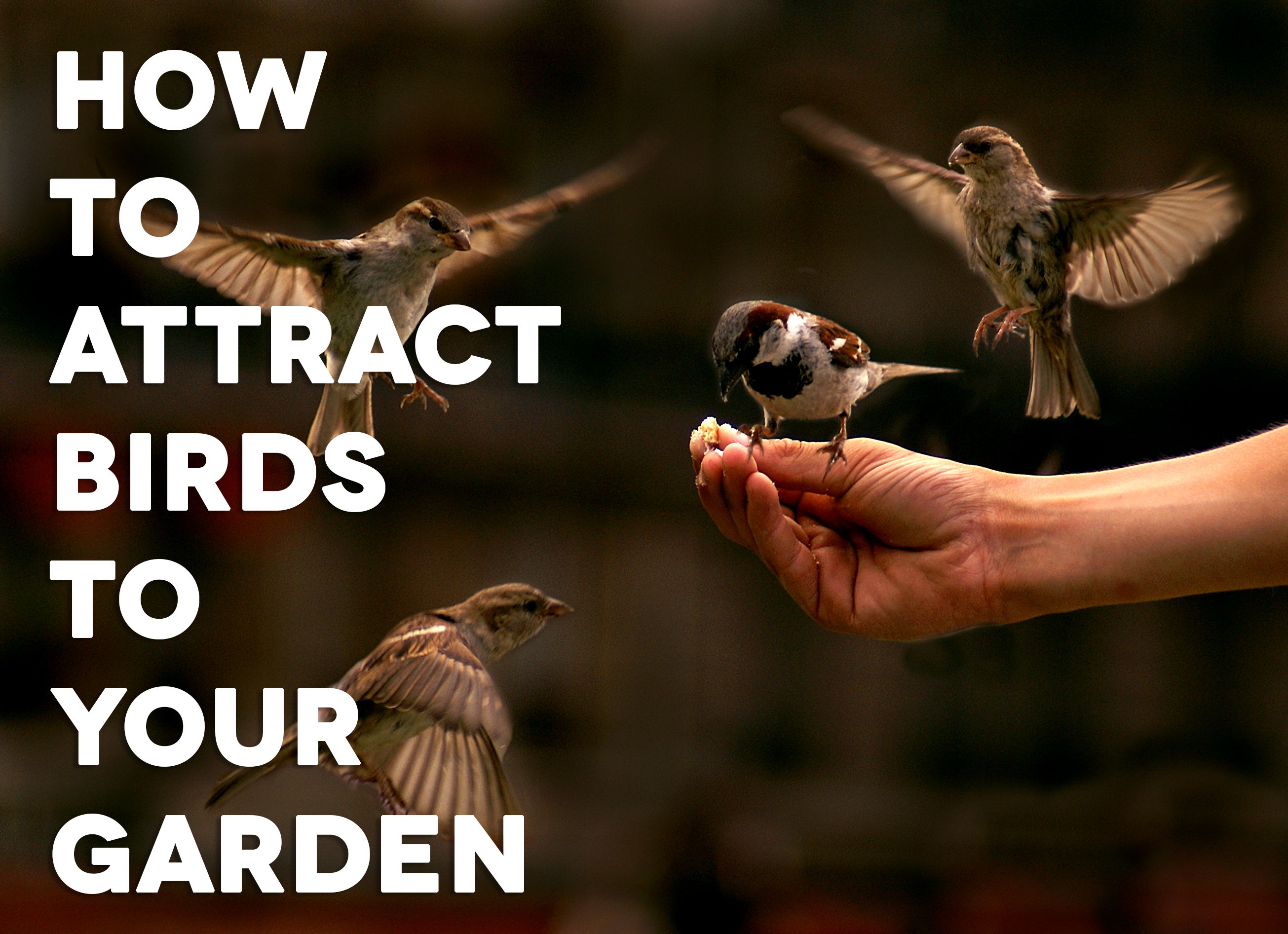 How to Attract Birds to Your Garden | Blindster Blog
