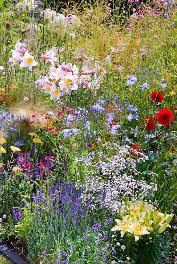 Create a Wildflower Zone for Low-Maintenance Landscaping